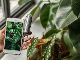 FYTA Beam - the smart plant sensor