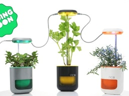 PICO: A garden in your palm. Growing is fun again!