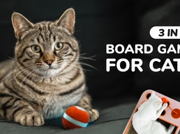 Cheerble Board Game - Keep your cat happy when you're away